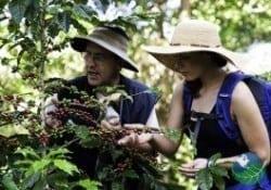 Costa Rica Coffee - tours