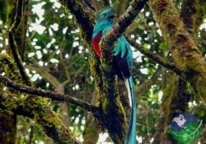 monteverde costa rica - quetzal