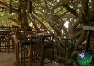 Monteverde Costa Rica treehouse