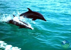jump into adventure with tours in manuel antonio dolphins