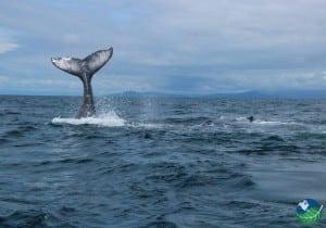 Ballena Beach Whales