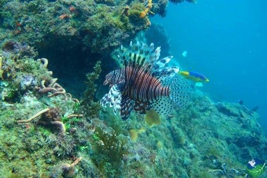 Cahuita LionFish Snorkelling