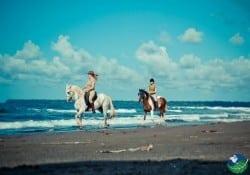 Caribbean-Horse