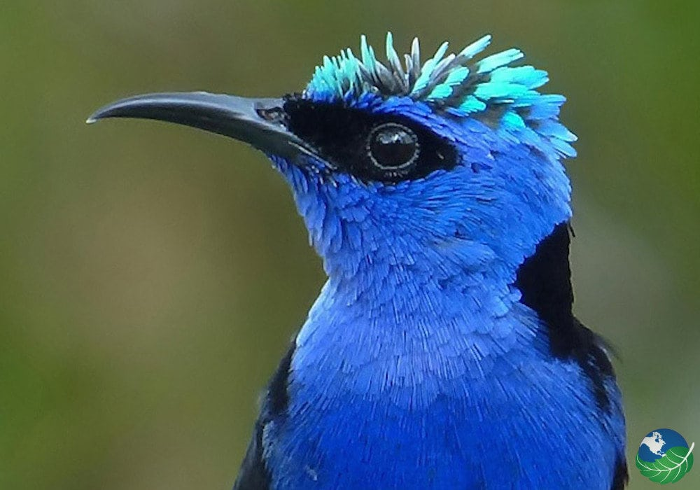 Central-Pacific-Bird