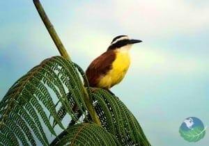 Cerro Chirripo bird
