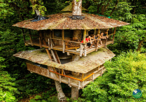Finca Bellavista Tree House