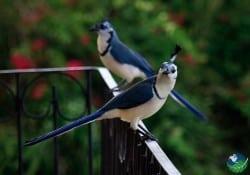 guanacaste birds