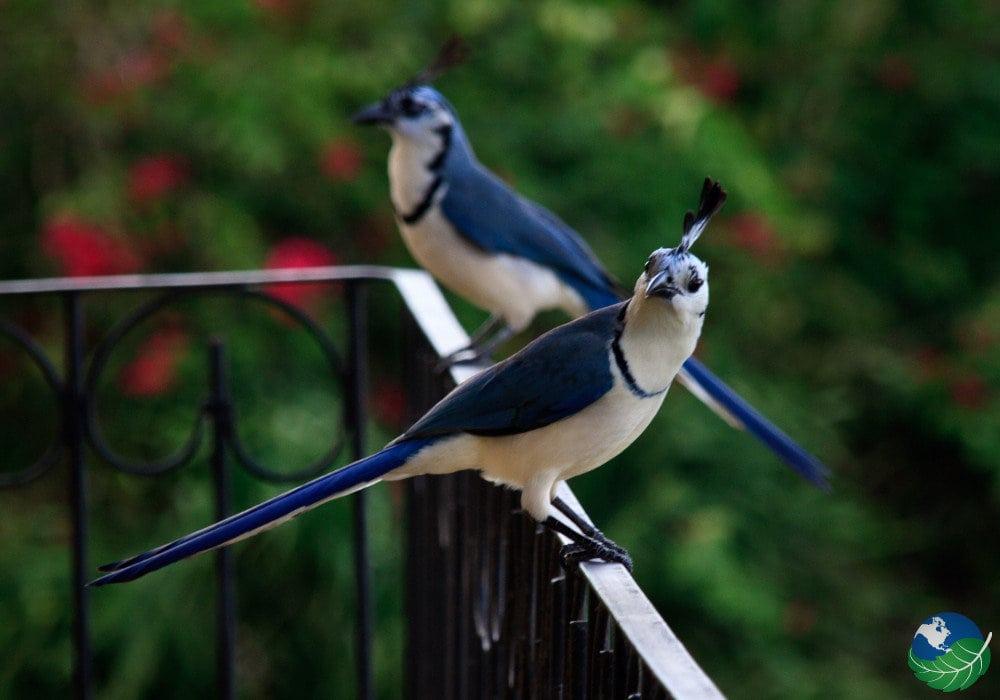 Guanacaste-Birds