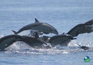 Hotel Aguila De Osa Inn Dolphins