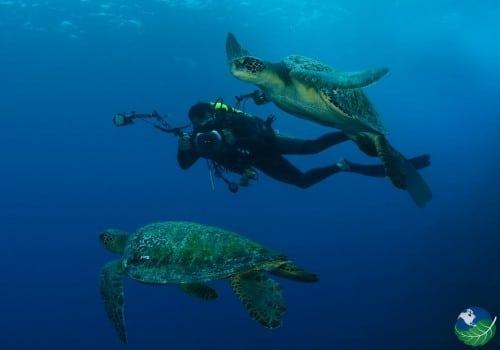 Cocos Island Scuba Diving
