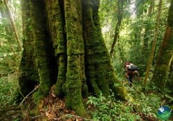 La Amistad Costa Rica tree