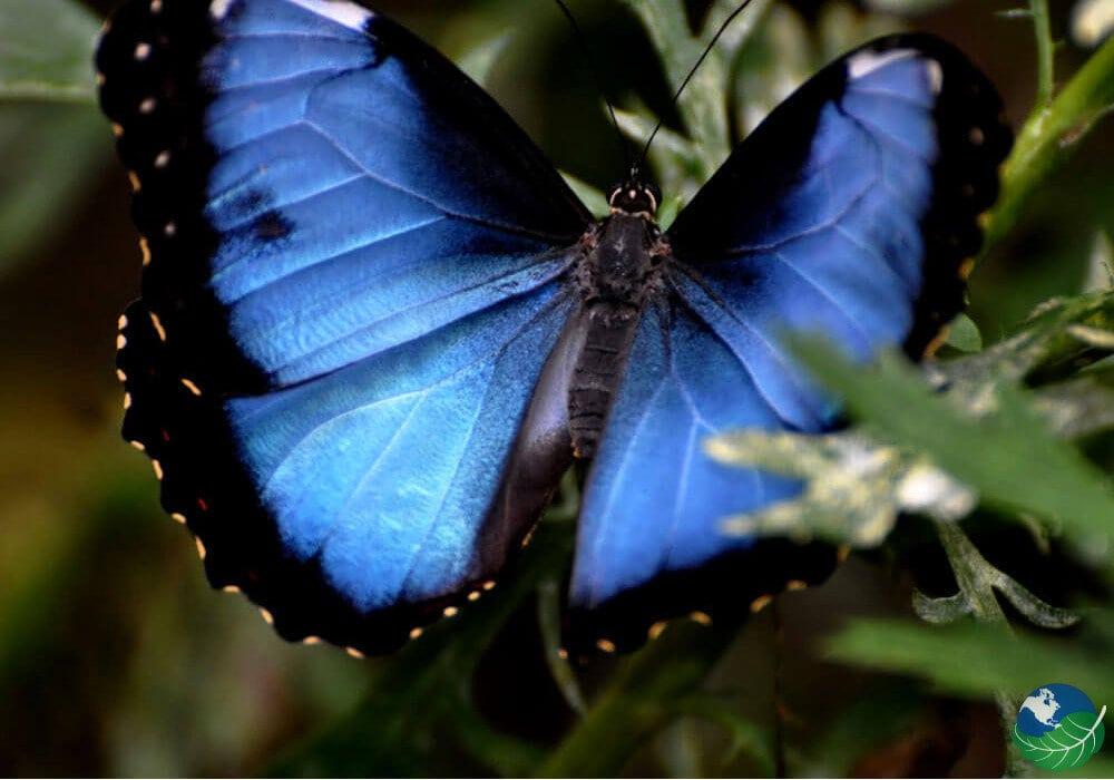 Monteverde-Butterfly