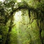 Monteverde-Forest