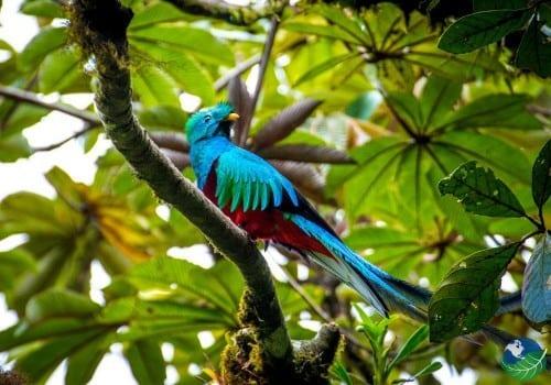 Monteverde-Quetzal