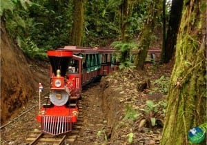 Monteverde Trainforest Tour