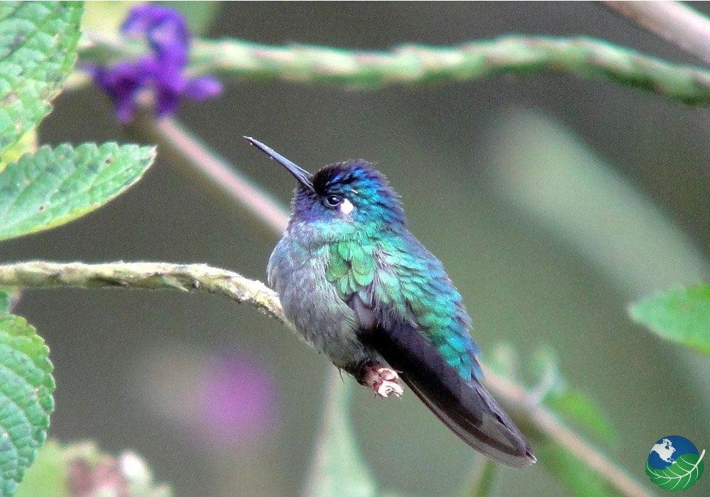 Orosi-Bird