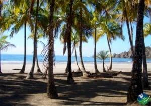 Carillo-Beach-Costa-Rica-Palm-Tree