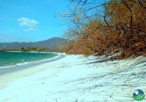 Playa-Conchal-Tree