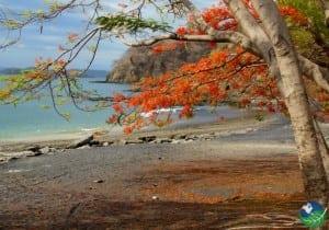 Playa-Ocotal-Flowers