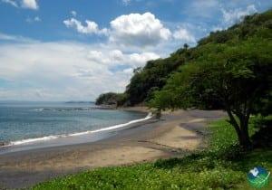 Playa-Ocotal-Tree