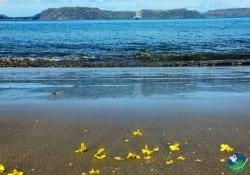 Playa Panama beach