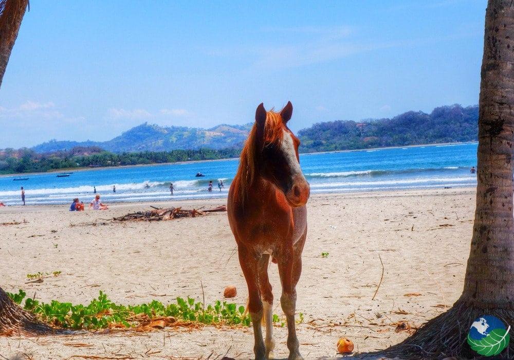 Samara Costa Rica horse