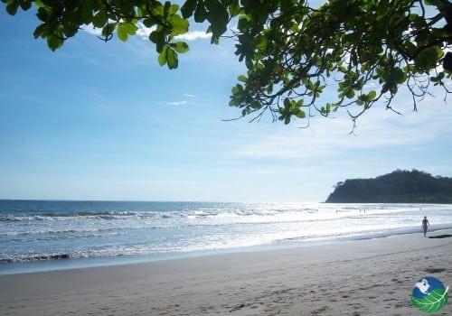 Samara Costa Rica trees