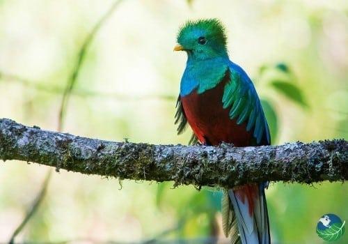 San Gerardo de Dota Quetzal