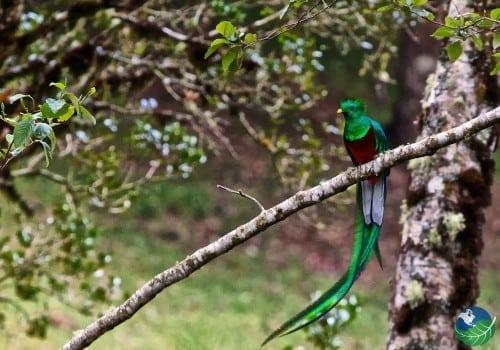 San-Gerardo-De-Dota-Quetzal-Full