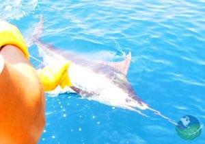 Morgans Cove Resort Sport fishing