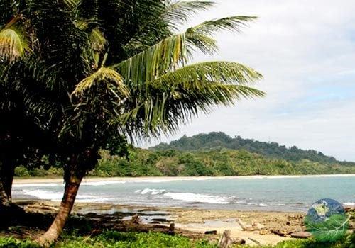 Puerto Viejo Costa Rica Trees