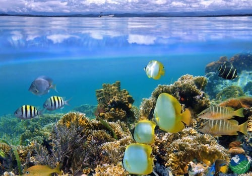 Cahuita Costa Rica Snorkeling