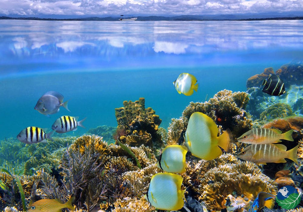 Cahuita National Park Snorkeling Tour Coral Reef