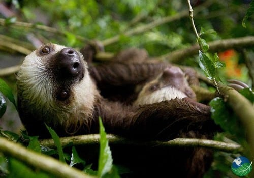 Wildlife Refuge Sloth