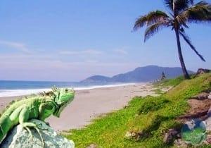 Cocos Island Nature