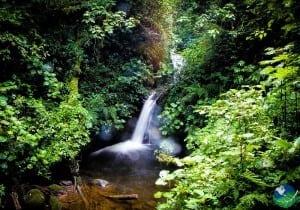 Monteverde Reserve Waterfall