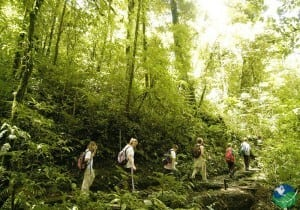 Monteverde Walk Tour