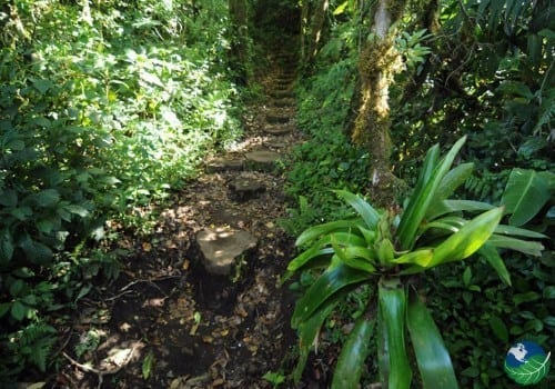 monteverde walk trail