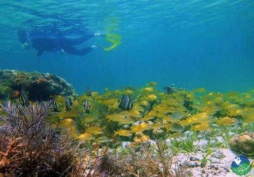 Scuba Diving Costa Rica Adventure