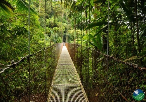 Arenal Hanging Bridges Jungle View