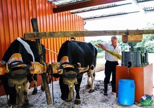 Trapiche Coffee Tour Costa Rica