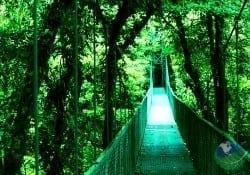 top 10 monteverde tours costa rica a rainforest experience establo lodge