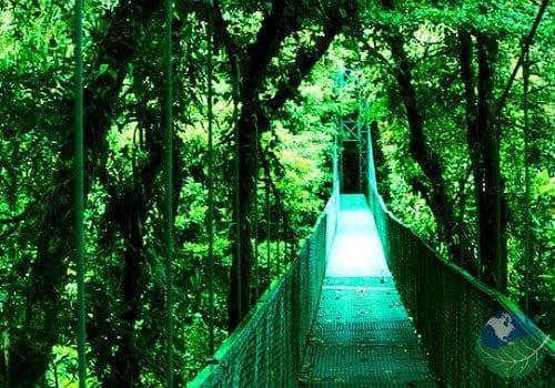 Top 10 Monteverde Tours Costa Rica A Rainforest Experience