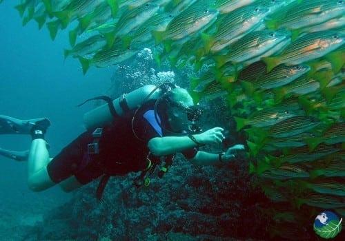 Cano Island Fish