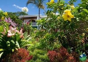 Hotel Buena Vista Gardens