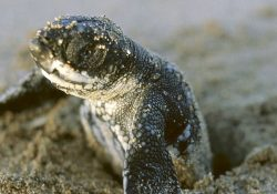 Animales de Costa Rica