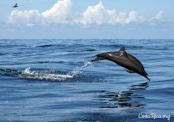 Costa Rica animals dolphins