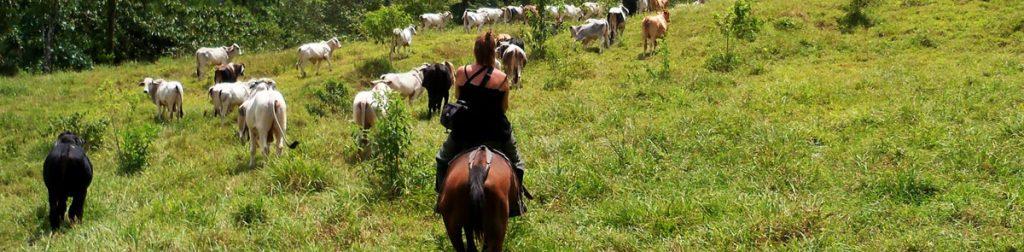 arenal to monteverde horseback
