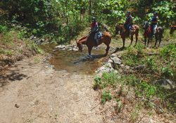 Arenal to Monteverde Trail Riding