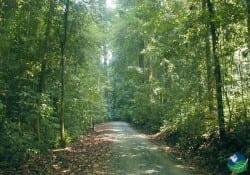 Carate Costa Rica Dirt roads